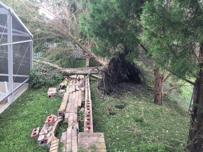 大樹由外倒至庭院,壓垮圍牆,需要受害屋主自行向保險公司申報賠償。(記者陳文迪/攝影)