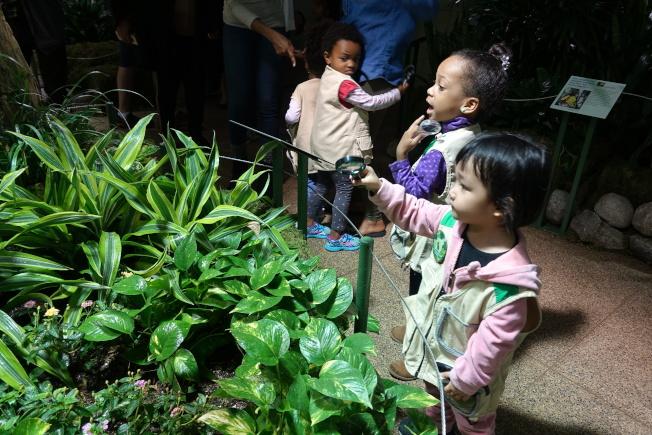 小朋友觀看蝴蝶。(記者金春香/攝影)