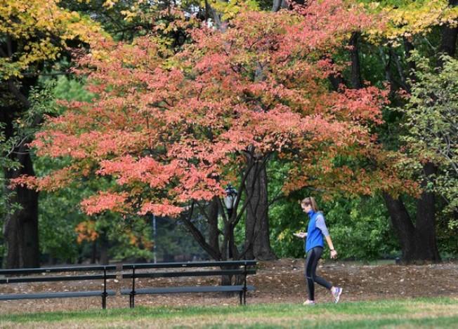 新州今年秋季寒意不在,平均氣溫高達64.1度。(美聯社)