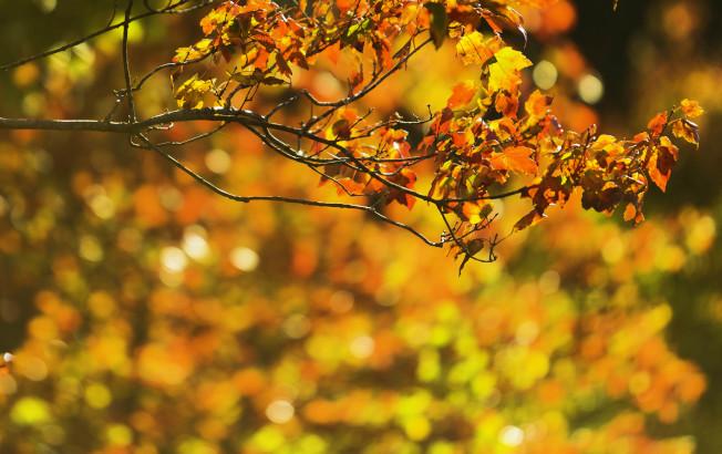 不與花爭紅,艷在秋風中。