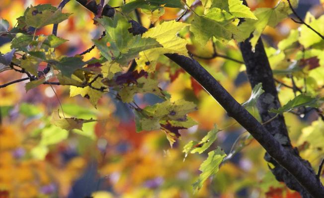 葉葉爭知秋。