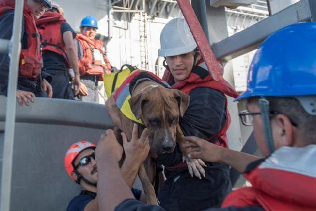 美國夏威夷2名女子和2隻隨行小狗原計畫航行前往大溪地,不料5月惡劣天氣導致船隻引擎損壞,在海上漂流數月後,才被台灣漁船發現獲救。圖/美國海軍提供
