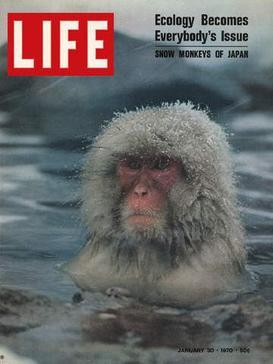 1970年1月30日,日本雪猴登上生活雜誌封面。(WikiCommons)