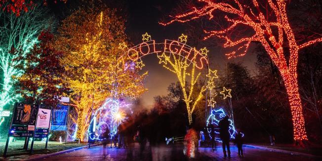 史密森尼國家動物園即日起至明年1月1日(12月24、25日除外),每晚都有動物園燈展「ZooLights」,還有音樂表演、冬季小吃、假日特色購物等。活動免費。(動物園提供)
