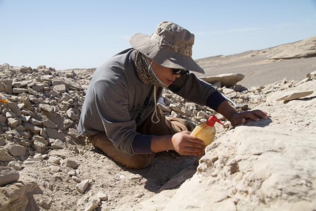 科學家在新疆哈密找到「翼龍伊甸園」,首次發現3D保存的翼龍胚胎。(新華社)