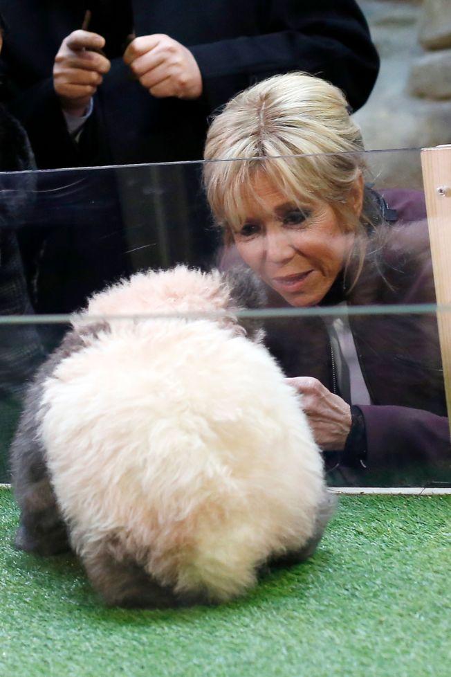 法國總統夫人逗弄熊貓寶寶。(Getty Images)