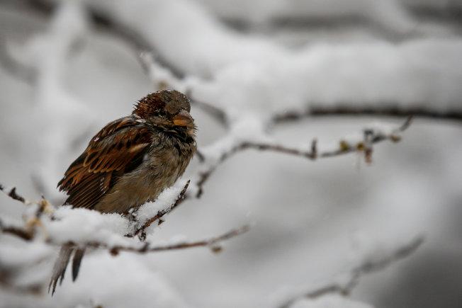 一隻小鳥不畏寒冷,獨立樹枝頭。(路透)
