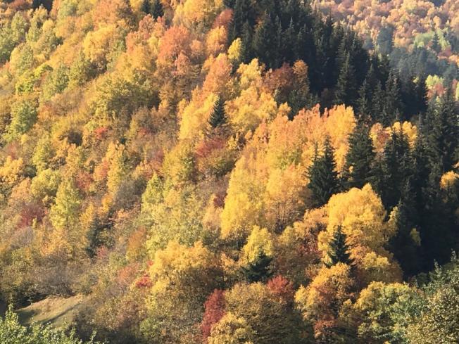 金黃色的山林。