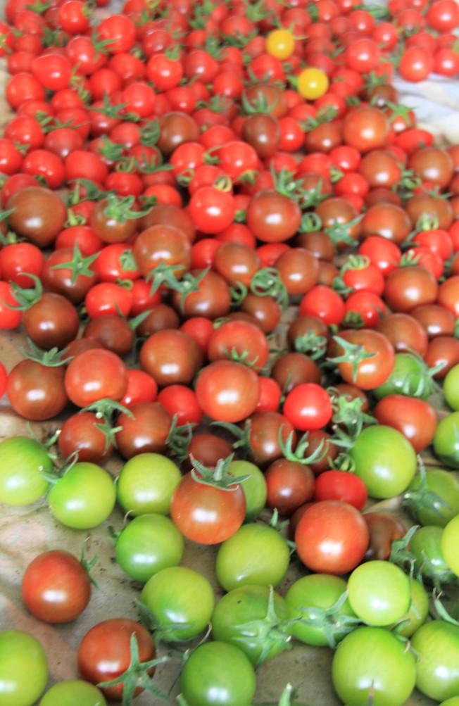 科學家表示,每天吃兩顆以上番茄的成年人,肺功能自然衰退速度較慢,且戒菸者似乎最能因此受益。(本報資料照片)