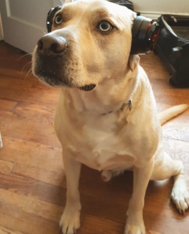 Amanda夫妻養了一隻拉布拉多犬Leon,還沒有子女的這對年輕夫婦說,Leon就是他們的狗兒子。(Amanda提供)
