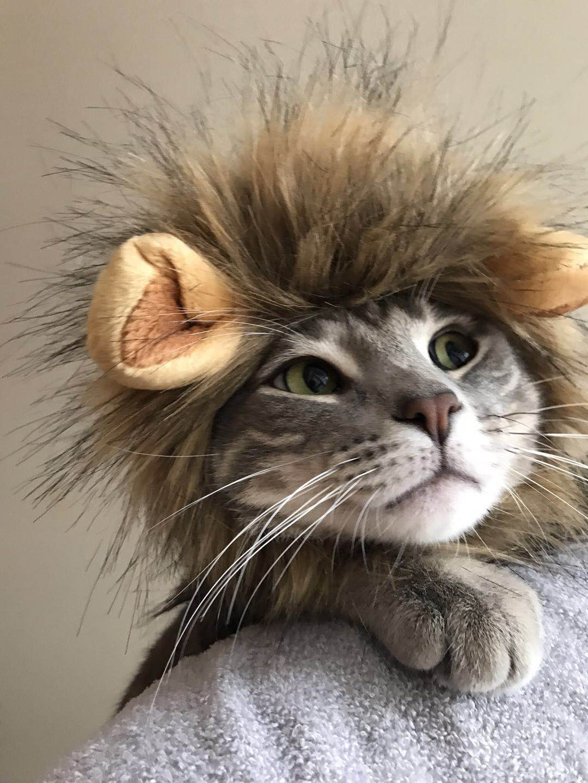 領養了兩隻貓咪「兒子」的Mary說,新州新的寵物撫養權法很人性化。(Mary提供)