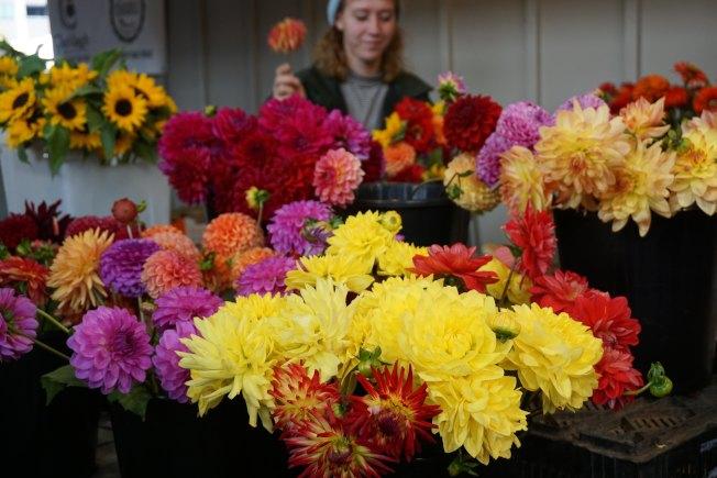 大麗花在花店和花市隨處可見,是農貿市場上最受歡迎的切花之一。
