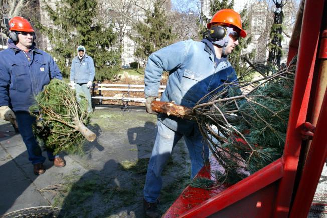 大華府多數地區居民都可在常規回收日回收聖誕樹,回收部門將有專人處理。(Getty Images)