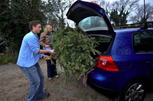 大華府部分地區不允許在路肩回收聖誕樹,居民可將聖誕樹拿到回收點。(Getty Images)