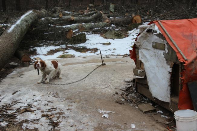 被虐待的動物,部分生活在「惡劣而不適宜」的條件下。 (取自RISPCA官網)
