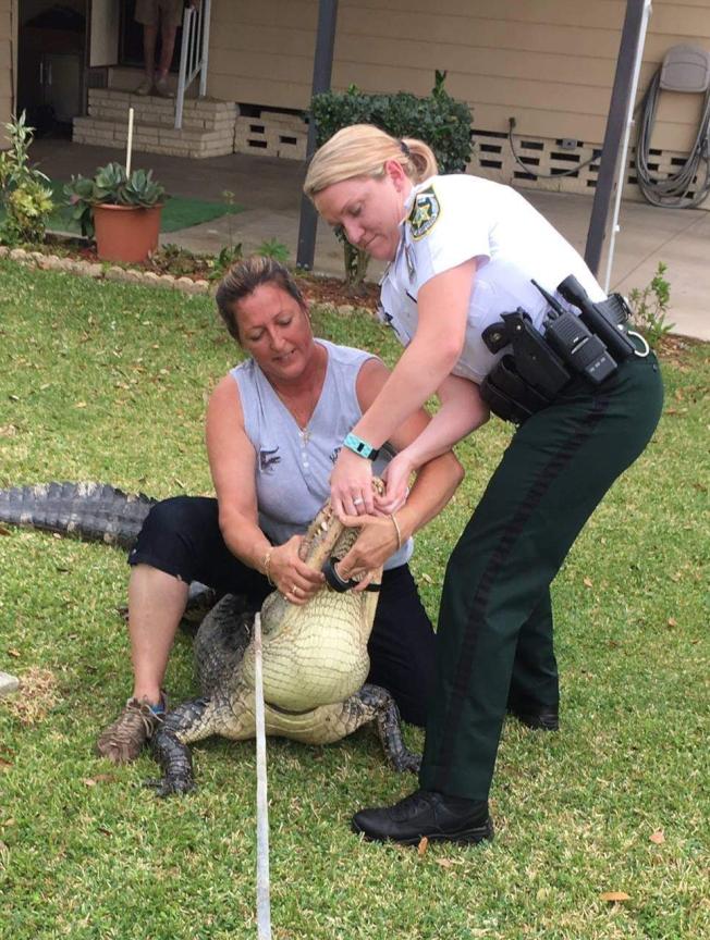 已有六名孫輩的茱莉(左),是唯一擁有佛州捕鱷執照的女性。(取材自警方臉書)