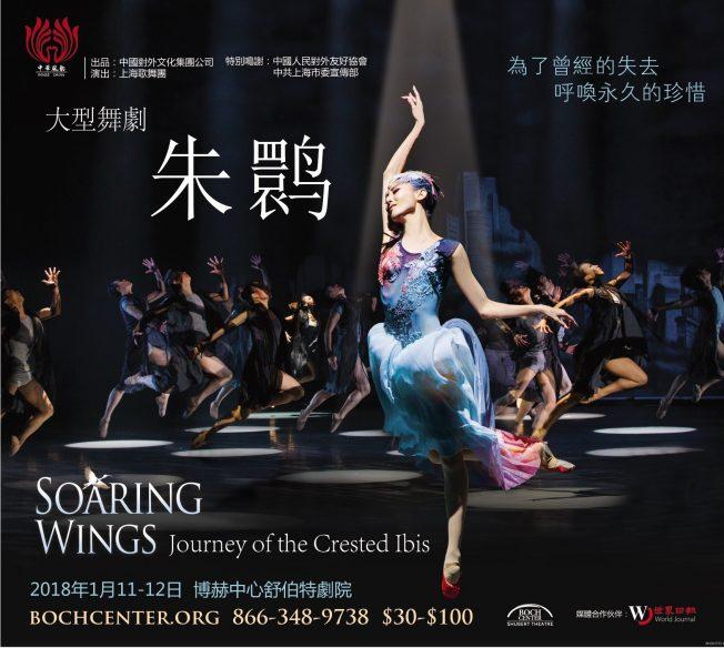 大型舞劇『朱鹮』明年一月波士頓上演!