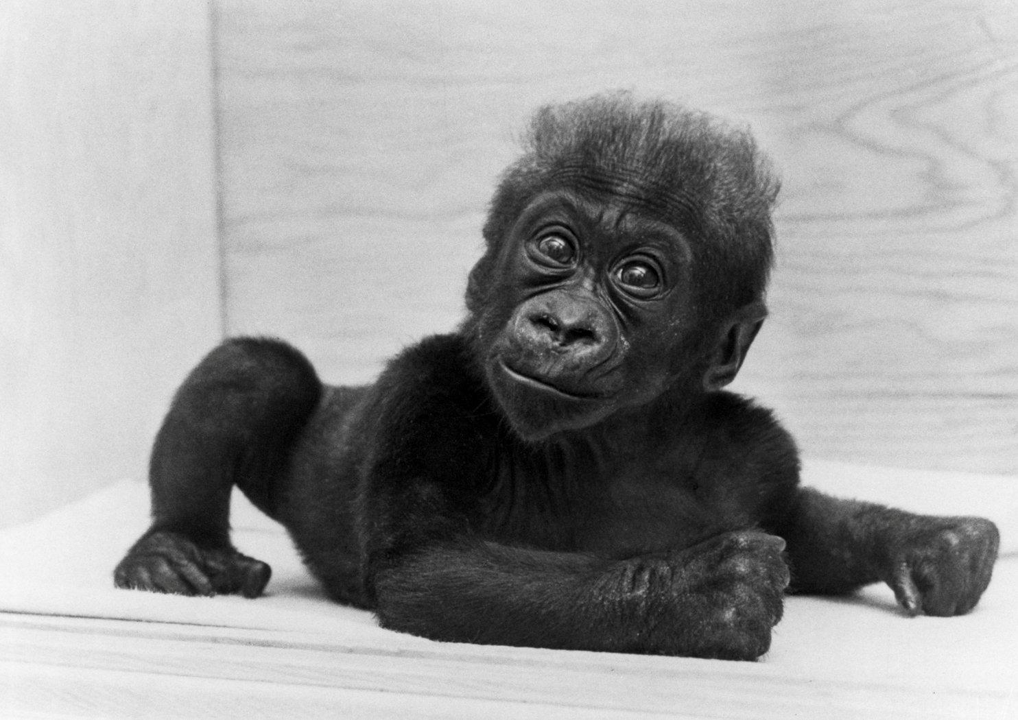 科洛剛出生時的可愛模樣。(路透)