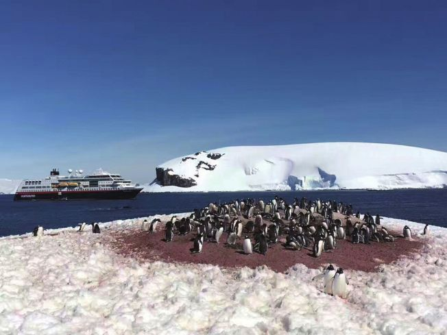 南極無名島,南極企鵝在舉行「聯歡晚會」。(取材自華西都市報)