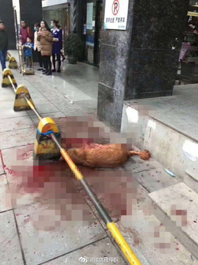 金毛狗被當眾活活虐打致死,現場布滿血跡,怵目驚心。(取材自微博)