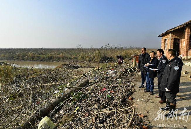 沅江市林業局工作人員正在統計歐美黑楊的砍伐面積。(取材自華聲在線)