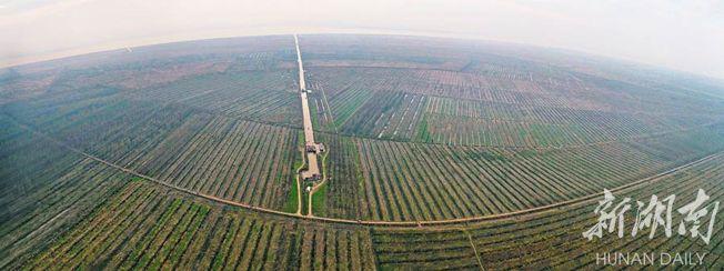 沅江市南洞庭湖自然保護區核心區,成片的歐美黑楊已經清理完畢。(取材自華聲在線)