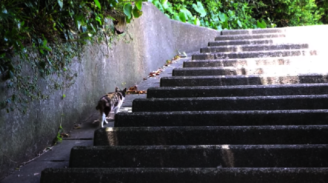 日本加唐島是著名貓島,上面隨處可見貓的蹤跡。取自YouTube