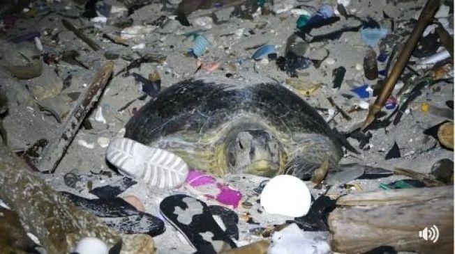 台灣生態學者劉烘昌拍下畫面,綠蠵龜返回充滿垃圾的沙灘產卵。劉烘昌臉書