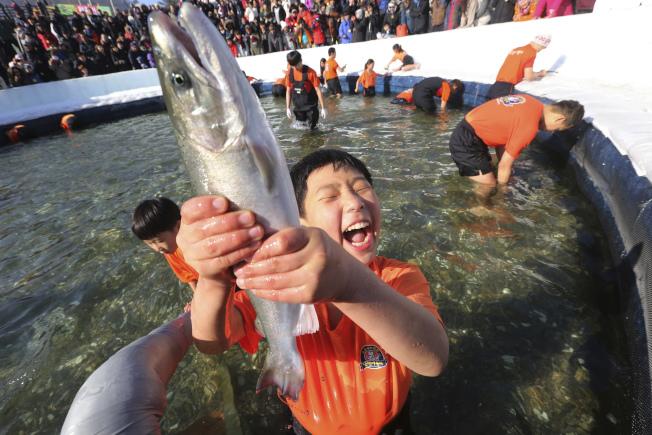 南韓江原道華川郡華川邑6日舉辦冰水裡限時搶抓鱒魚的比賽,規定只能著短袖衣褲下水,每人限抓3條。(美聯社)
