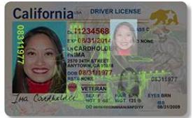 全真駕照在紫外線燈照射下的驗偽圖像。(DMV提供)