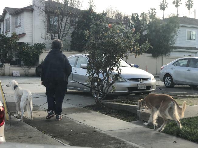 1月聖他克拉拉爆發流感季,不只是人類,南灣各獸醫診所也傳出多起狗流感確診的案例。(記者林亞歆/攝影)
