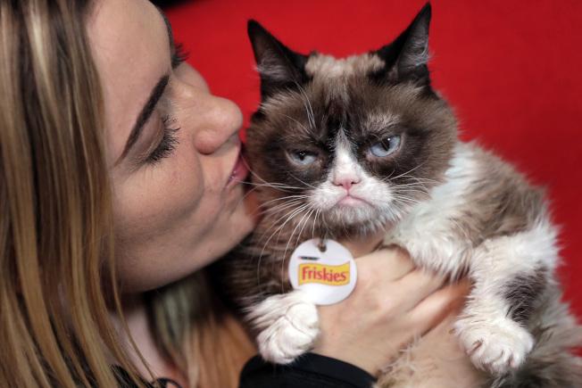 超人氣網路明星寵物「臭臉貓」。美聯社