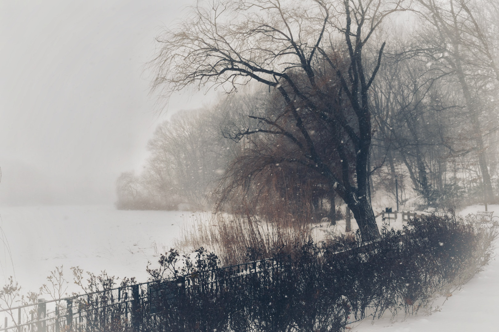 頂著酷寒,精受著報風雪的樹。(網友笨小孩@紐約皇后區Oakland Lake)