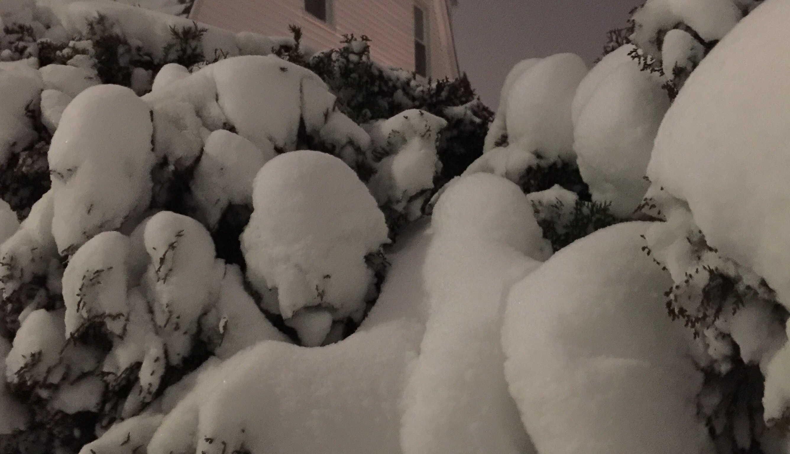 「氣候變暖,北極熊無奈來紐約歇腳。」(網友曹德作2018/01/04 @紐約貝賽)