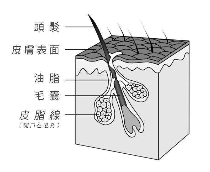 (取自謝宗廷醫師部落格)