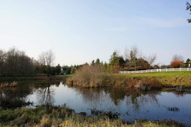 水塘周围是大片的湿地,为牠们提供了良好的食物资源和隐私。