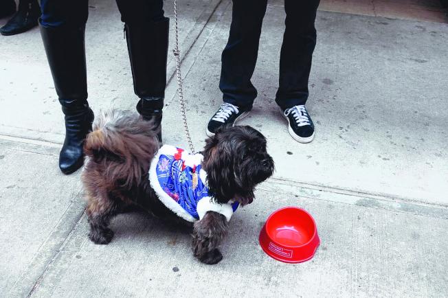 民眾為狗狗穿上中國風衣物。(記者金春香/攝影)