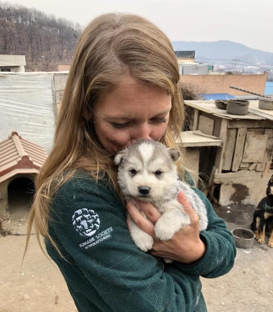世界人道救援組織在平昌市區附近一間養殖場,營救90隻原本將淪為盤中飧的小狗。(取材自HSI)