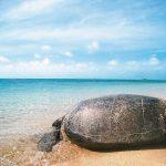 全球暖化又惹禍 大堡礁發燒、搶救綠蠵龜