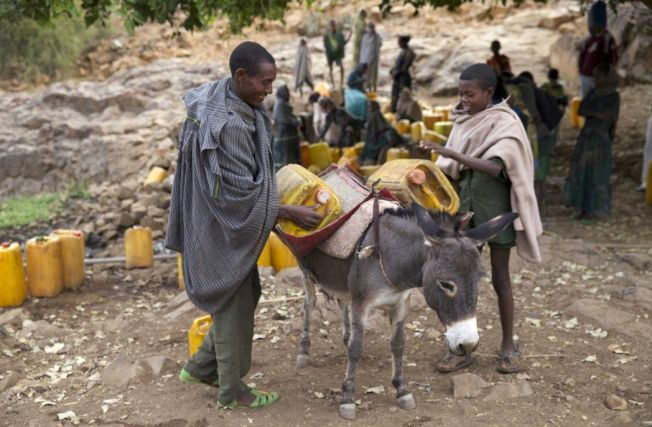 中國大陸每年從非洲進口數百萬隻驢子製作阿膠,已逐漸引起國際關注。路透