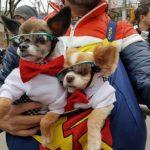 〈圖輯〉 曼哈頓新春遊行 狗狗出門迎狗年