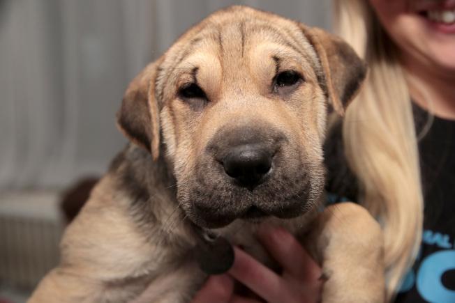 灣區購屋者搶屋招數百出,「情書」、寵物照片都派上用場。(Getty Images)