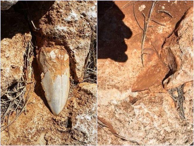 一顆巨齒鯊的牙齒化石,從澳洲偏僻的世界遺產地區的秘密地點失蹤。圖為藏匿在石堆的巨齒鯊牙齒化石遭竊前後對照圖。圖/取自西澳省野生動物園臉書