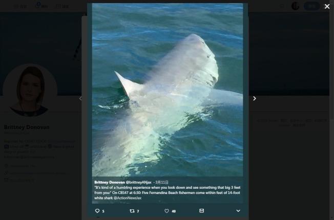 美國佛州一位船長10日駕船載釣客到外海海釣,船邊突然竄出4公尺長的大白鯊。翻攝@brittneyANjax/Twitter