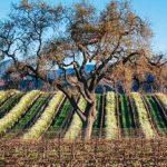 美中貿易戰 加州農業陷恐慌