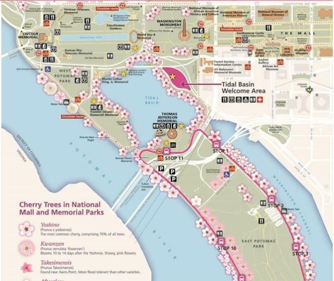 國家公園局網站有潮汐湖賞櫻攻略地圖。(NPS)