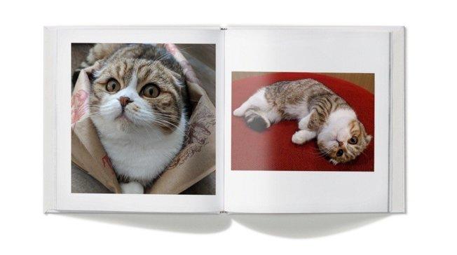 Google Lens不但可正確辨識貓跟狗,更能進一步判斷其品種類別。(取材自聯合新聞網)