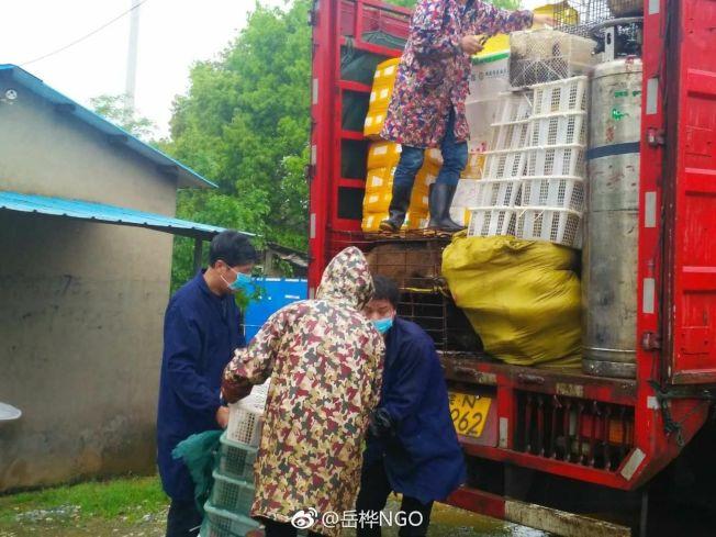 南昌市林业局组织人员在江西省林业科学院野生动植物保护研究所里清点野生动物数量。(取材自微博)