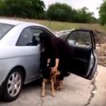 棄養五隻狗觸法 網路瘋傳眾怒
