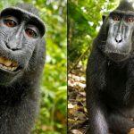 猴子自拍照有沒有版權? 法院這麼說…